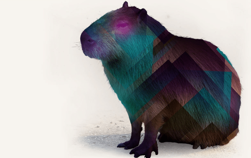 Feature Testing With Capybara Drifting Ruby